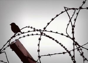 campaign-detention